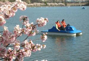 blossoms_boat1