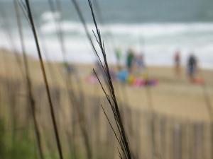 beach_reeds