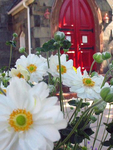 flowers_church