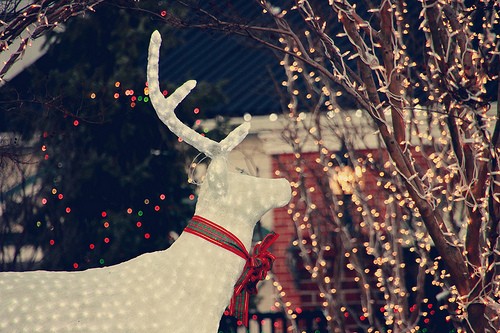 Lights and reindeer