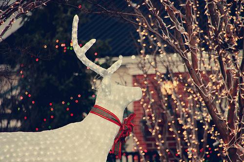 Lights and reindeer