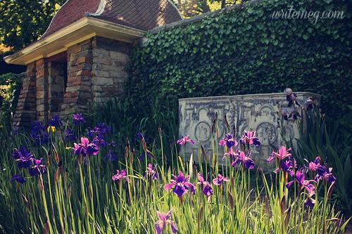 Dumbarton garden