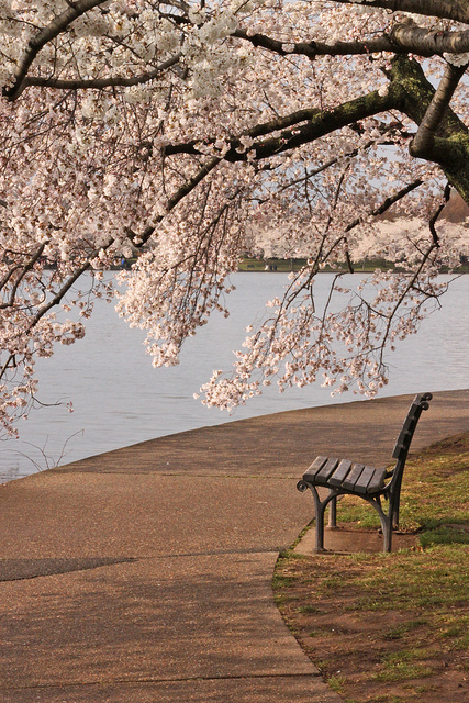 Blossoms and bench
