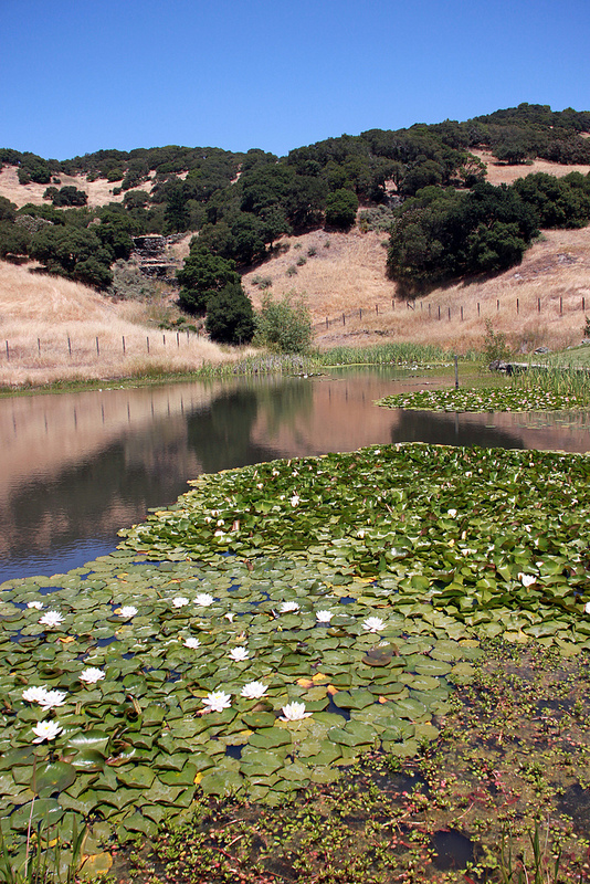 Lilypads and hills