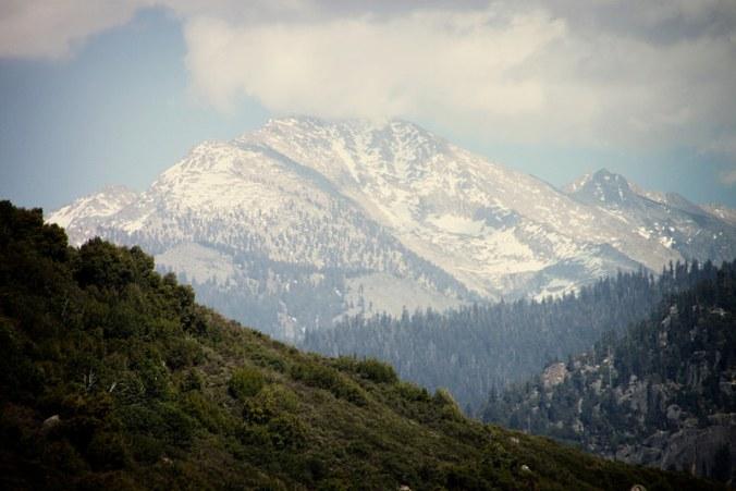 Sequoia IV