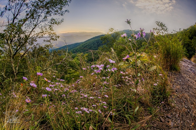 Appalachian Trail by Frank Kehren