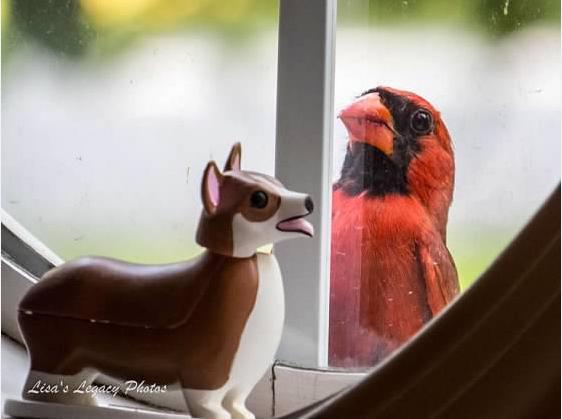 Cardinal Friend